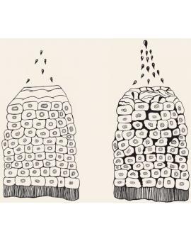 Смягчители в креме для кожи: воск, силиконы, эфиры, кислоты и масла