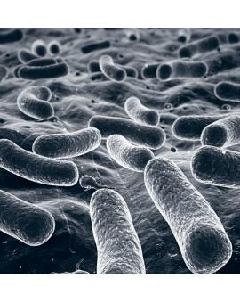 Биотики в уходе за кожей: пребиотики, пробиотики и постбиотики